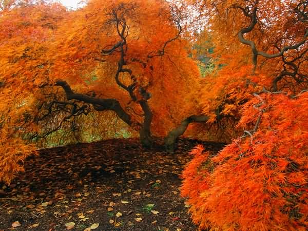 Beautiful Pictures of Autumn