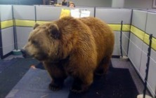 bear-office-prank