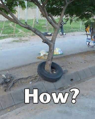How ? How Did The Tyre Go Around The Tree