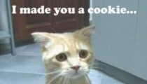 Cute message from a cat